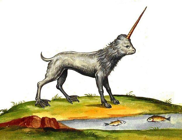 File:Aldrovandi unicorno camphurch.jpg