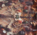 West Ryder Pauper Lunatic Asylum CDDVD Album (PARADISE58) - 14
