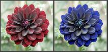 Flower for entrace