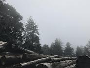 Crescent Manor-The Nature3