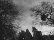 Crescent Manor-The Nature8