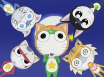 Kero Cats