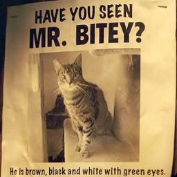 File:Mr. Bitey.jpeg
