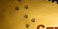 Strange Kat on a Train