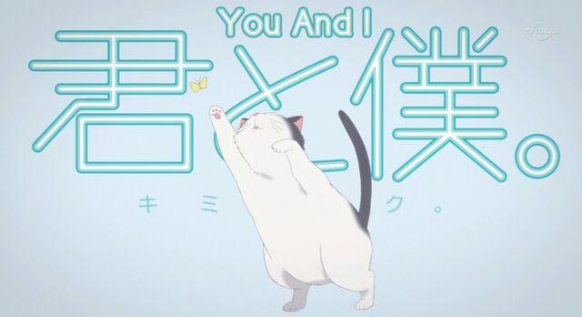 File:Kimi-to-boku-cat.jpg