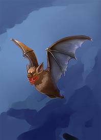 File:Card bg Bat.jpg