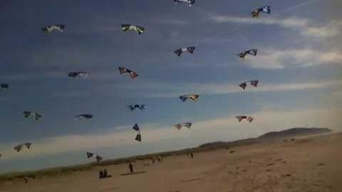 Rev Kite Mega-Grid World Record - WSIKF 2010