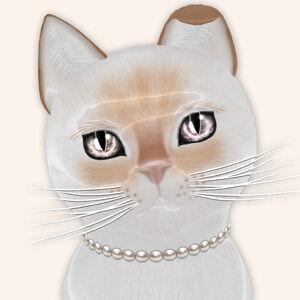 KittyCatS! - Taylor Tail