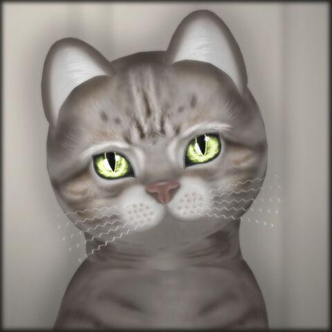 File:KittyCatS! - Blushy Lady.jpg