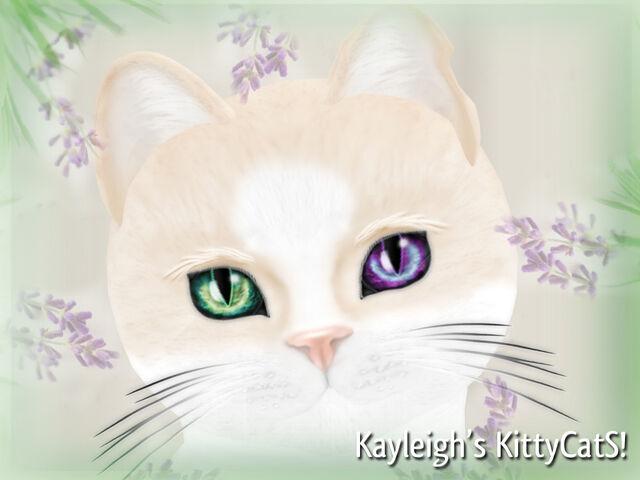 File:Kayleigh's KittyCatS!.jpg