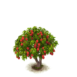 Sw lychee tree last