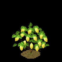 File:Lemon last.png