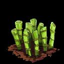 Sugarcane last