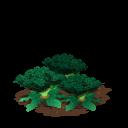 Broccoli last
