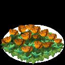 File:Tulip flower bed orange last.png