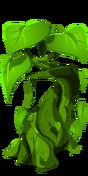 Beanstalk last
