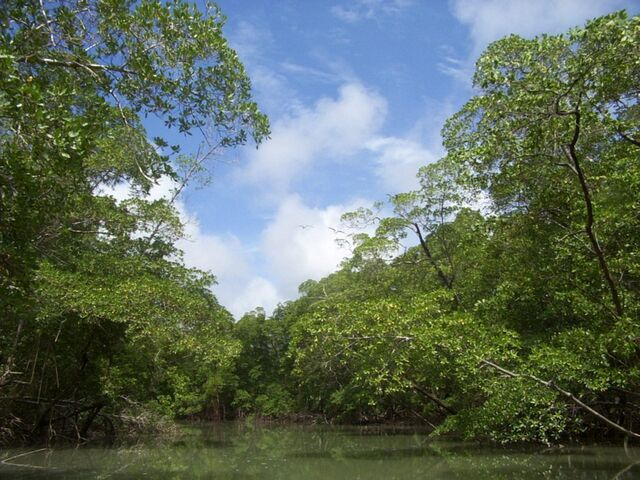 File:River in the Amazon rainforest.jpg