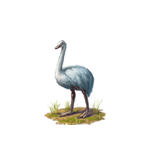 File:Whiteostrich.png