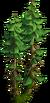 Tree-Double fir-tree