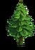 Tree-Fir-tree