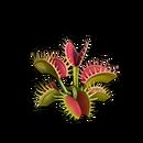 Healing flytrap