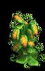 Res breadfruit tree 2