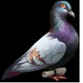 Coll postal pigeon