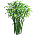 Res bamboo 2.png