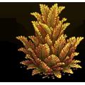 Res juniper yellow 1.png