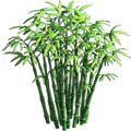 Res bamboo 3.png