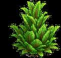 Res juniper 1.png