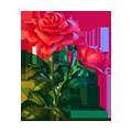 Coll flowers briar-rose