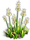 Resource-Iris 1