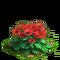 Poppy plant ph3
