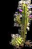 Res cactus 1
