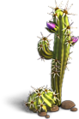 Res cactus 1.png