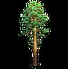 Resource-Pine 3