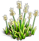 Resource-Iris 2