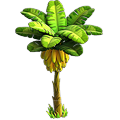 Banana tree.png