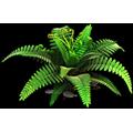 Resource-Ferns