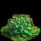Poppy plant ph2