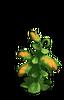 Res breadfruit tree 1