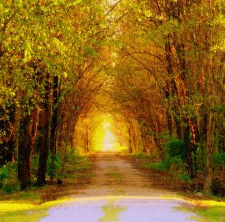 File:Road-less-traveled.jpg