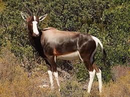 File:African mammal.jpg