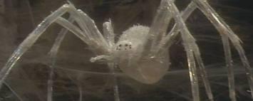 File:A krull spider.jpg
