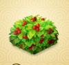 CranberryBush