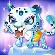 Animal Leopard