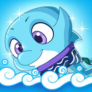 Animal Dolphin