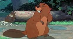BeaverFull