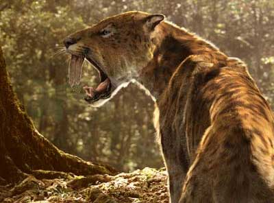 File:Sabretooth cat.jpg